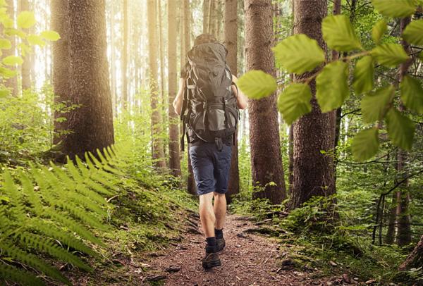 Actief wandelen in de omgeving